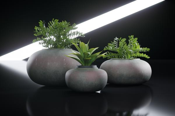 Exotic plants in rock shaped planters